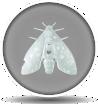 Detail ico image